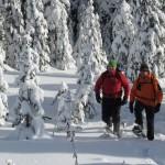 Alpine Snowshoe Experience