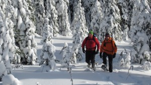 alpine snowshoe